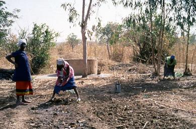 Preparing garden 01