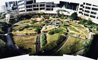 A birdseye view on Darling Harbour rooftop garden