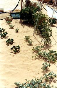 Neighbour's garden02
