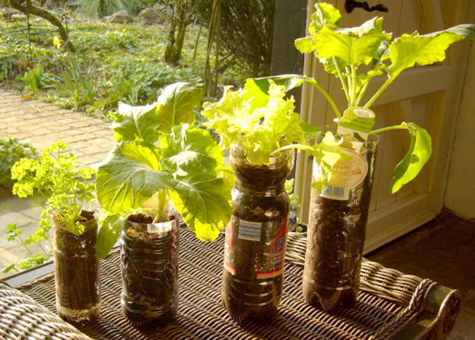 Gardening In Bottle : My vegetable garden in plastic bottles (Willem / MMC ...