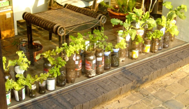 plastic bottle plants