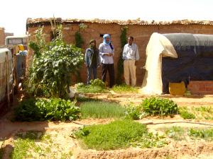Family garden Layoun2