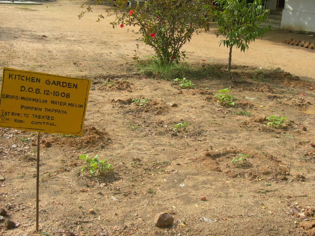 Kitchen Garden In India India Kitchen Gardens And Fruit Tree Afforestation To Combat
