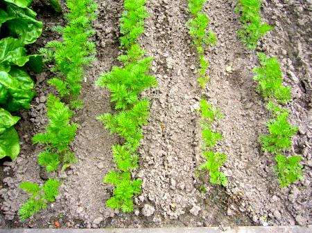 Effect of a new Indian organic fertilizer (Willem) – DESERTIFICATION