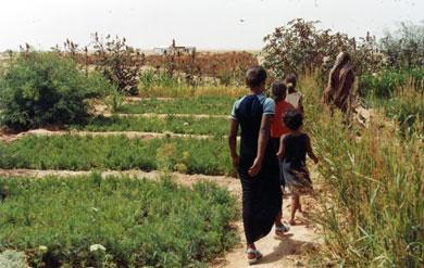 2006-05 Kitchen garden in Aussert camp (S.W. Algeria)
