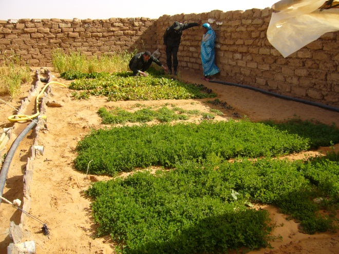 2007 - If such a nice garden is possible in the desert, it can surely be duplicated everywhere with a minimum of irrigation water.
