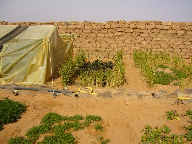 2007 - Is it only a dream that every family in the drylands should have such a low-cost litchen garden ?  If it's only a dream, then simply forget that many families are already happy having one.