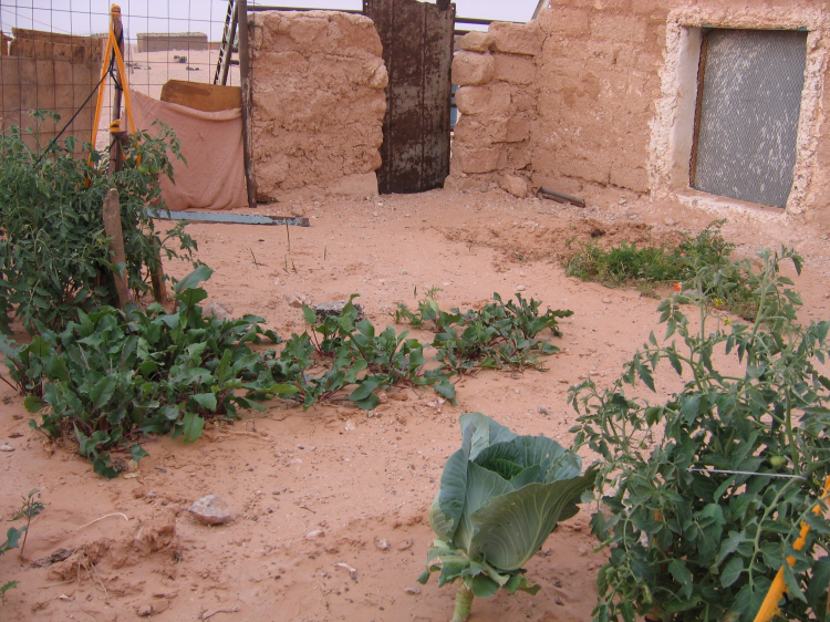 Small Scale Gardening A Big Step In Combating Desertification Willem Van Cotthem
