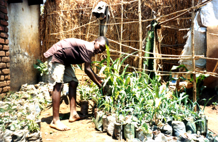 2009 - Isaac, another member of the FOM KC, taking good care of the maize grown in plastic bags.