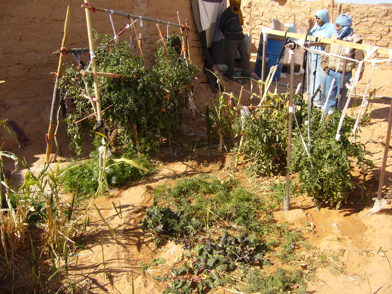 guerilla gardening – CONTAINER GARDENING
