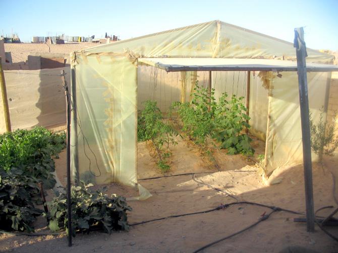 Swell Family Gardening In The Sahara Desert Taleb Brahim Willem Home Interior And Landscaping Oversignezvosmurscom
