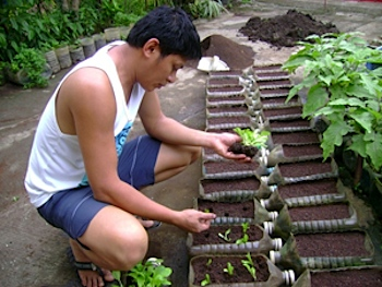 "Urban farmer Perfecto ""Jojo"" Rom an Agriculture graduate of the Xavier University Ateneo de Ca an de Oro plants ve ables in plastic containers in his"
