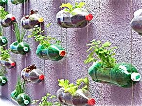 Using Recycled Bottles As Hanging Vases For Vegetables Or