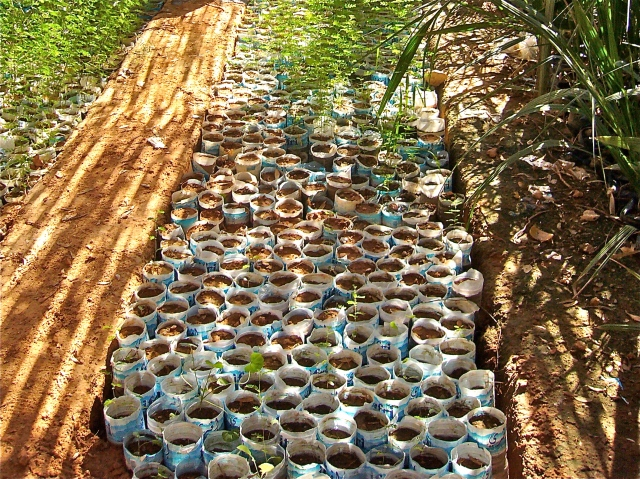 Culture autonome des pommes de terre en bouteille 2007-11-tindouf-pepin-forest-p1010348_2_2