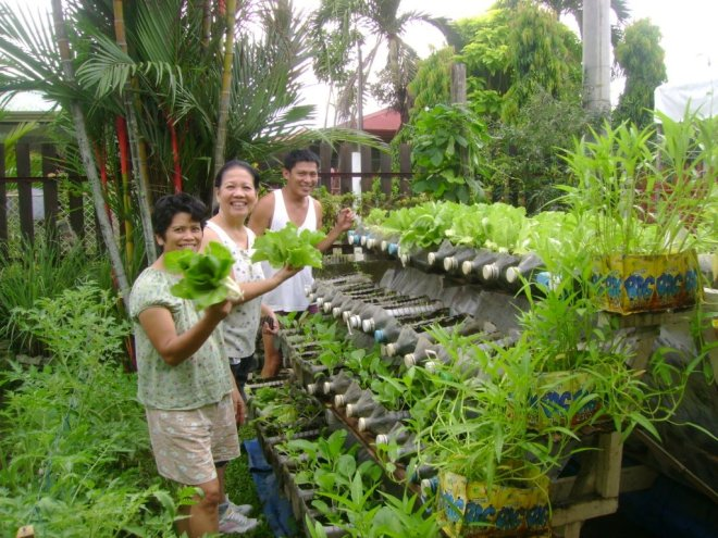 Growing fresh food in recycled containers on a bottle rack in The Philippines.  A technique that can be by all the hungry people of this world (Photo Jojo ROM)