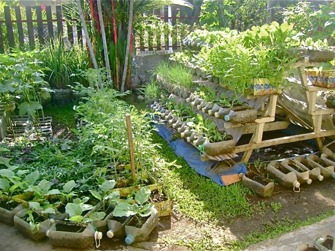Solution for the hunger problem food production at home for Backyard food garden ideas