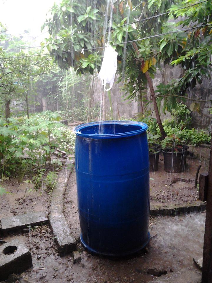 Giant blue barrels drums for rain water harvesting Willem Van