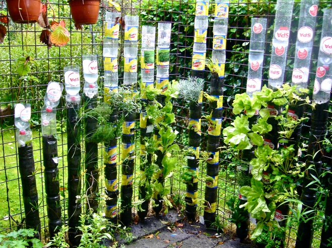 Combating malnutrition with vertical gardening in bottle towers.  Masses of food on a few square feet with only a bit of water.  Can you do better ?  Then show us. (Photo WVC)