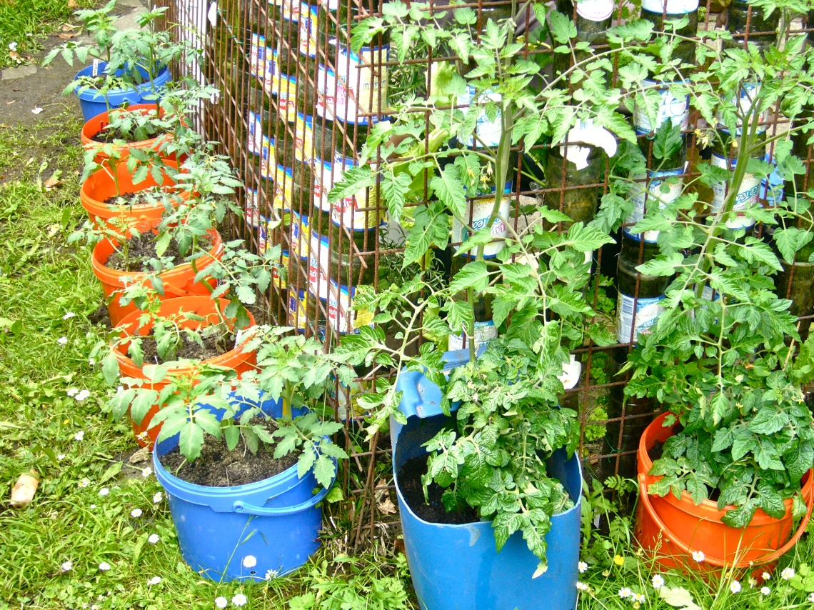 Image Result For How To Grow Fruits And Vegetables In Pots