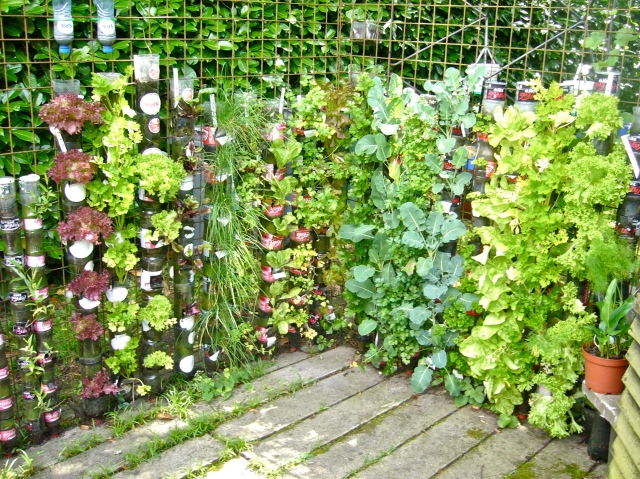 2012 : And the result of growing vegetables and herbs in bottle towers (Photo WVC)