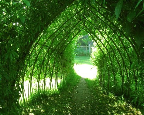 Tunnel - willow - Photo Avantgardens - 575749_621090494571382_833796101_n