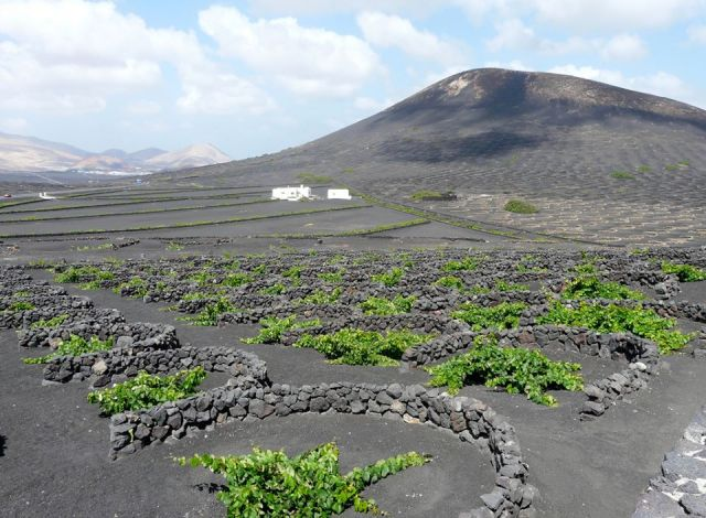 Walls in crescent protecting vines at Lanzarote, Spain