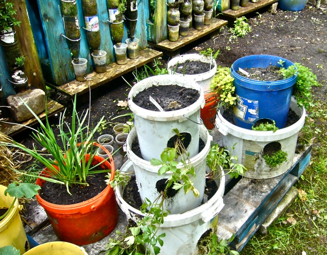 Every family with a small backyard can produce sufficient fresh food to complete staple food (rice, wheat, ...) by setting up towers of bottles (fixed on pallets in the background) or in towers of buckets (foreground) - (Photo WVC)