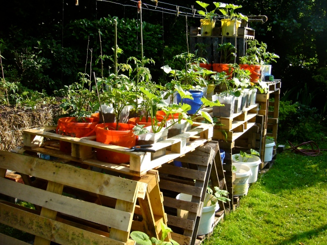 A lot of containers (buckets, pots, bottles) can be placed on pallets to get a maximum of food production in a minimal space.  One can determine the best position of the containers on the pallet structures (full sunshine or more shady spots) - Photo WVC -