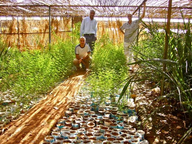 2007-11 : Use of recycled soda bottles in the Tindouf nursery (S.W. Algeria) / Recyclage de bouteilles en plastique dans la pépinièrede Tindouf (S.W. Algérie) - Photo WVC)