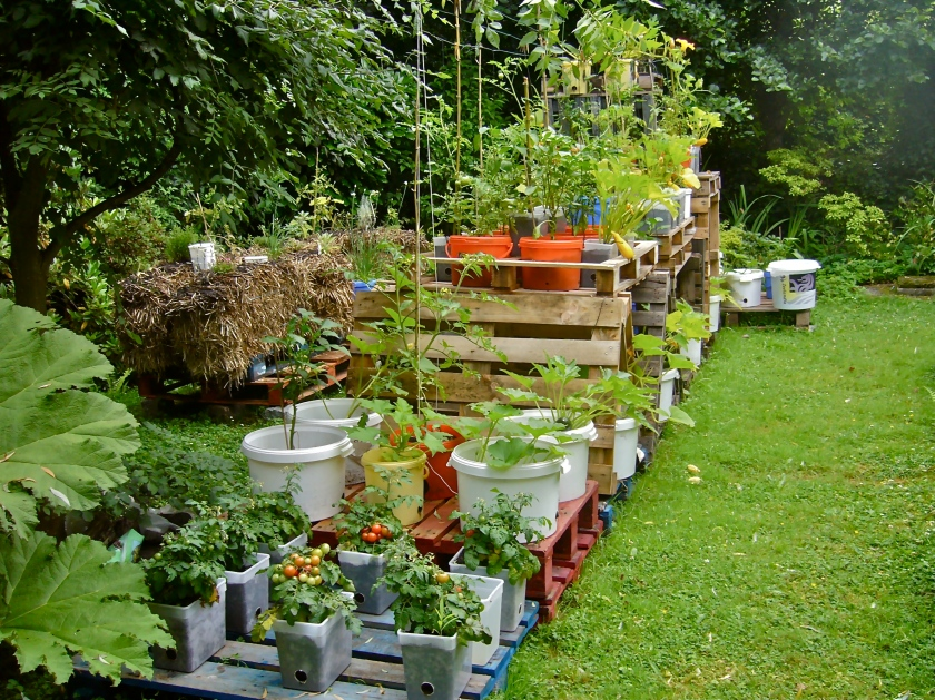 My new experimental pallet garden in Zaffelare, Belgium, with various containers and a lot of vegetables (Photo WVC)