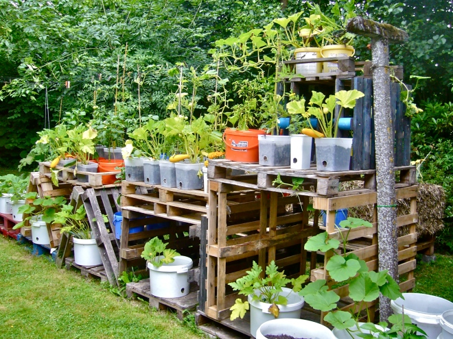Anyone anywhere can set up a small kitchen garden with pallets, buckets, pots or other containers, filled with a mixture of local dirt and manure or compost.  That's a nice strategy to combat hunger and poverty ( Photo WVC)