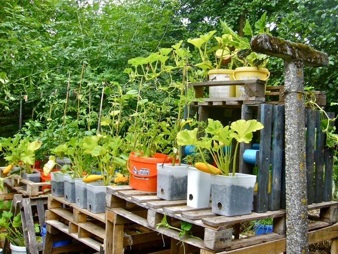 My new experimental garden to show how with recycled (re-used) materials a nice kitchen can be built, a solution for the alleviation of hunger and child malnutrition in developin countrie (Photo WVC)