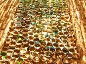 2007-11-TINDOUF-PEPIN-FOREST-P1010349_2