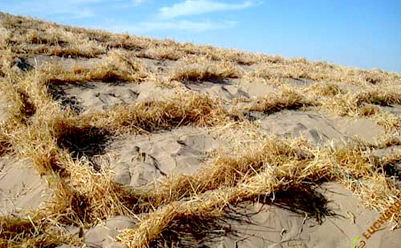 Sand accumulation near the Straw Checkerboard Barriers