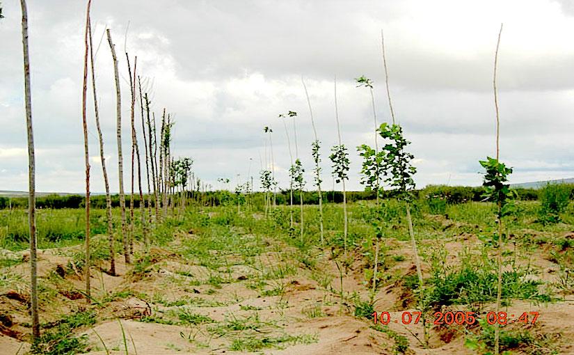 Desertification countermeasures