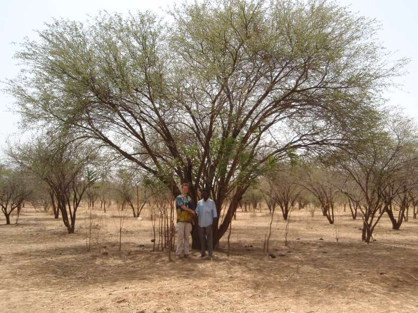 Fighting desertification with trees inChad