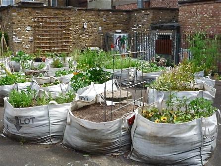 sack gardening DESERTIFICATION
