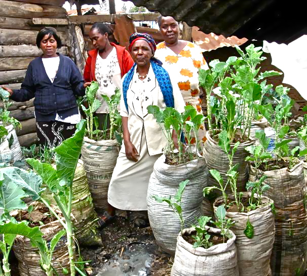We need a programme to promote sacks gardening at a global level