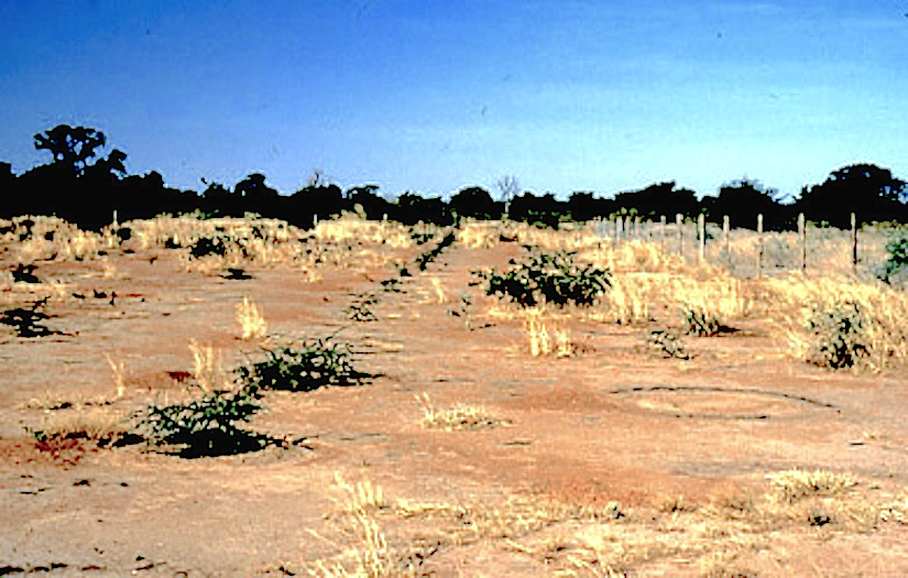 Desertification: the scientific consensus report