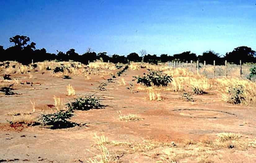 Desertification: the scientific consensusreport