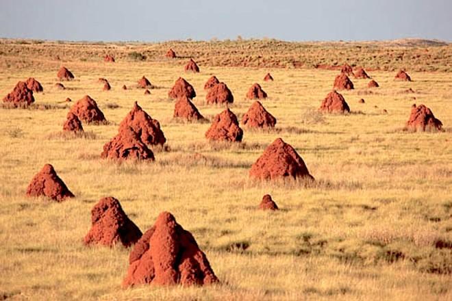 Onslow, Western Australia - http://www.oilandgasphotographer.com/enviro/images/enviro19.jpg