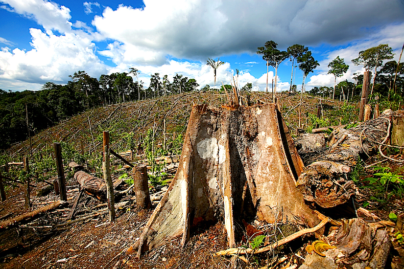 Deforestation in Brazil affects rainfall