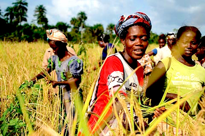 Rural women can be the drivers within sustainable, community-led development – they are often the ones working the most hard to feed their communities! - https://indievolunteer.files.wordpress.com/2012/10/investing-african-agriculture.jpg