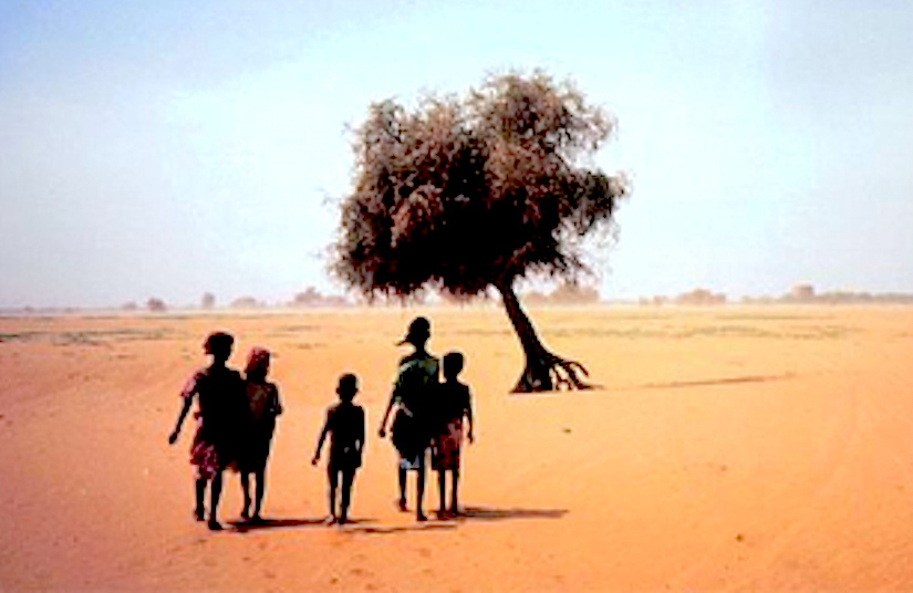 desertification in niger However in niger the pastoral zone to the north of tanout (the town 13km n of   the sahara desert itself but from desertification within the agricultural zone.