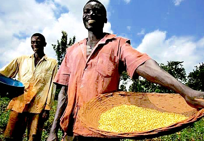 Empowerment of agribusiness giants rather than smallfarmers