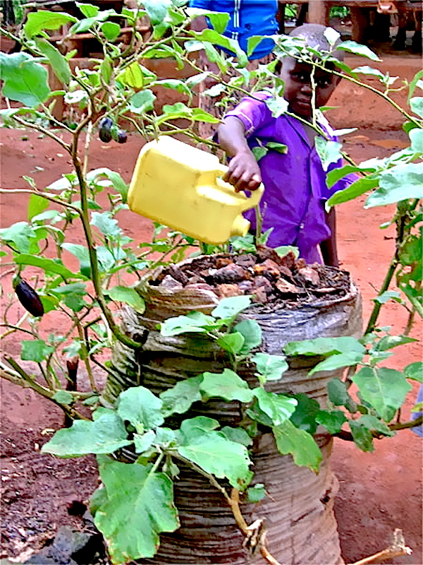 Sack gardening in Uganda - eggplants - Photo Vermicomposters - African_Gardens_Uganda_bag_garden_Douglas copy.jpg