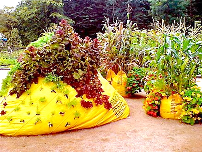 Gardening on garbage big bags - Photo Crops in pots Treehugger 404459_315544111821294_262706507105055_858274_1606004967_n copy.jpg
