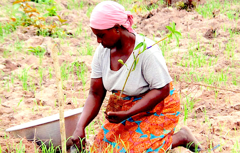 Central role of women in achieving food and nutritionsecurity