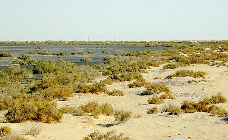 The role of halophytes in salt-affectedareas