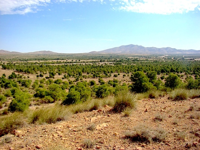 Green Dam reforestation with Aleppo pine in the locality of El Hamel. - https://planet-risk.org/index.php/pr/article/viewFile/171/319/1412